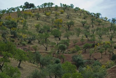 Near Malaga