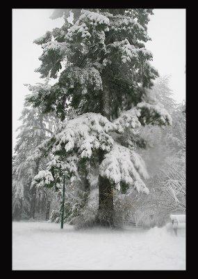 SnowCC01