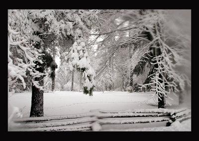 SnowCC03