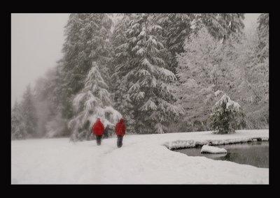 SnowCC019