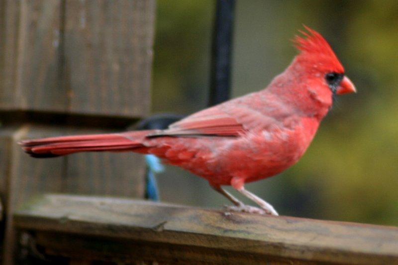 October 28, 2006<BR>Cardinal