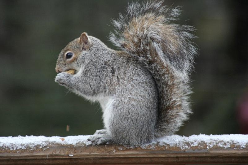 Squirrel<BR>April 5, 2007