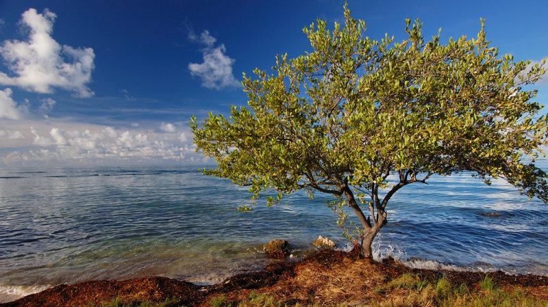 Colony Key, Florida Keys