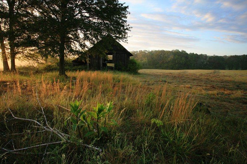 Barn-Yard