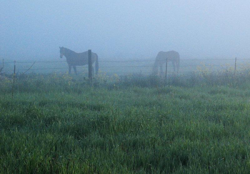 Foggy-Morning-Vignette-W.jpg
