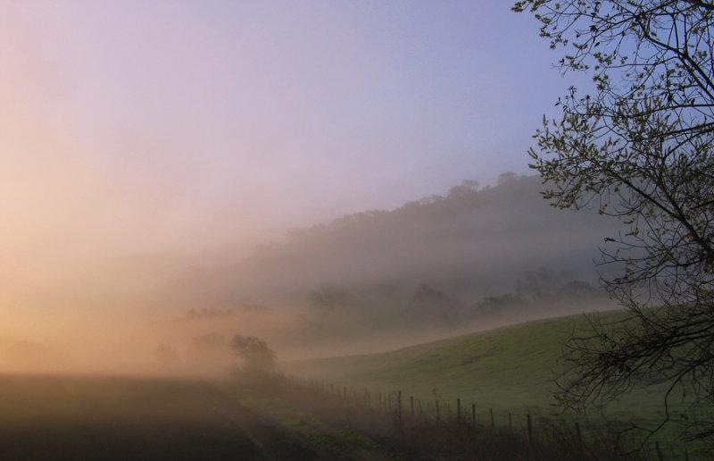 Field in Fog.jpg