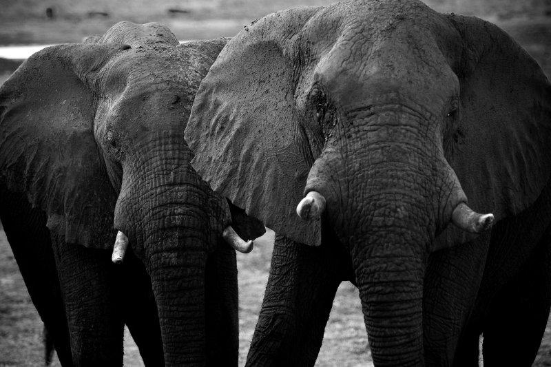 Botswana, Chobe NP 3