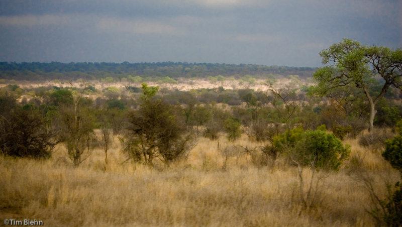 Kruger Savannah
