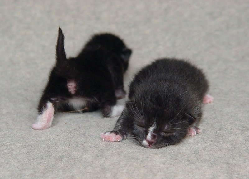 Black And White Newborn Kittens | www.pixshark.com ...