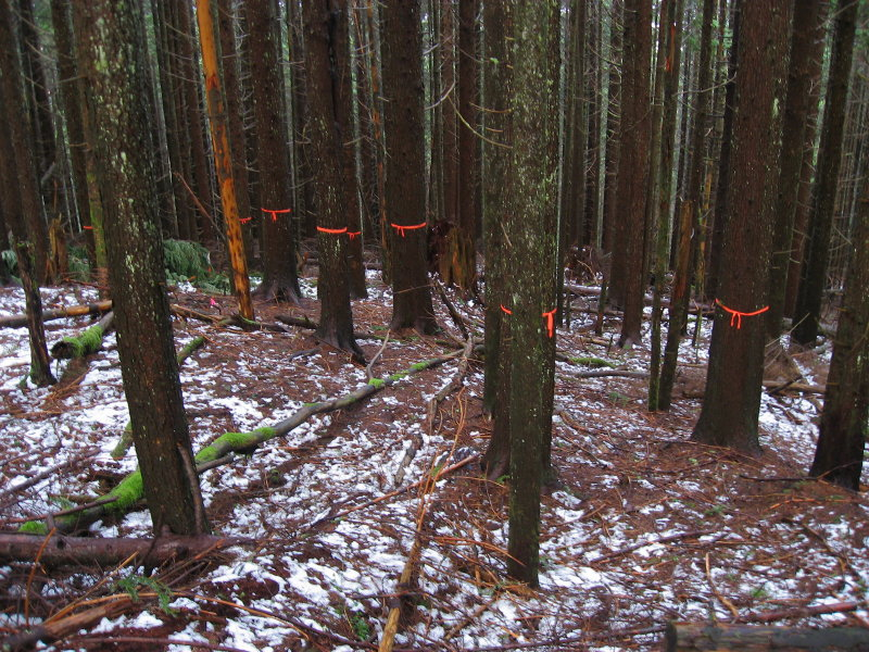 Bypass Trail <br>Marked for Logging?</br>