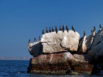 Gulls stone / Piedra gaviota