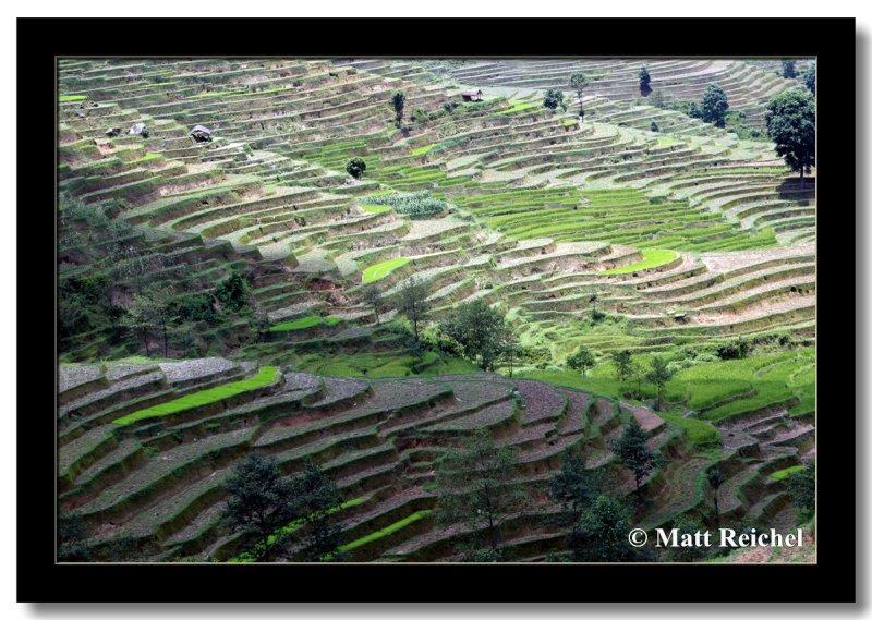 Terraces, Siruvari, Nepal
