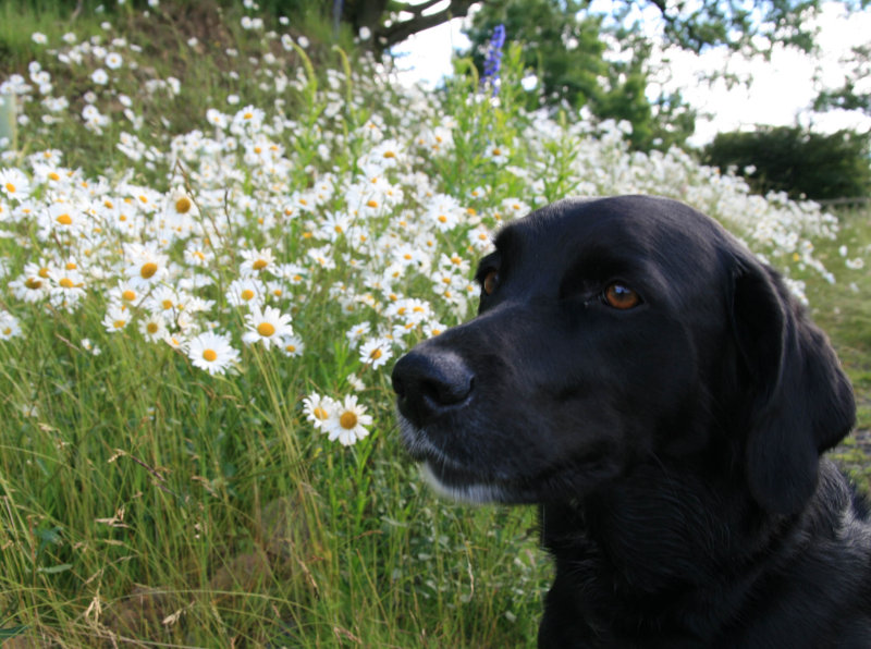 Holly and daisies