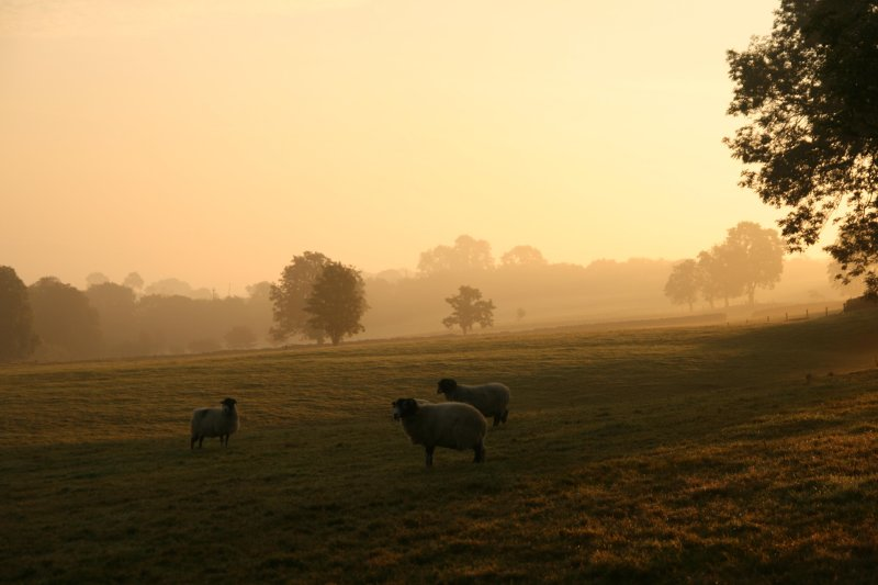 misty morning at White Kirkley