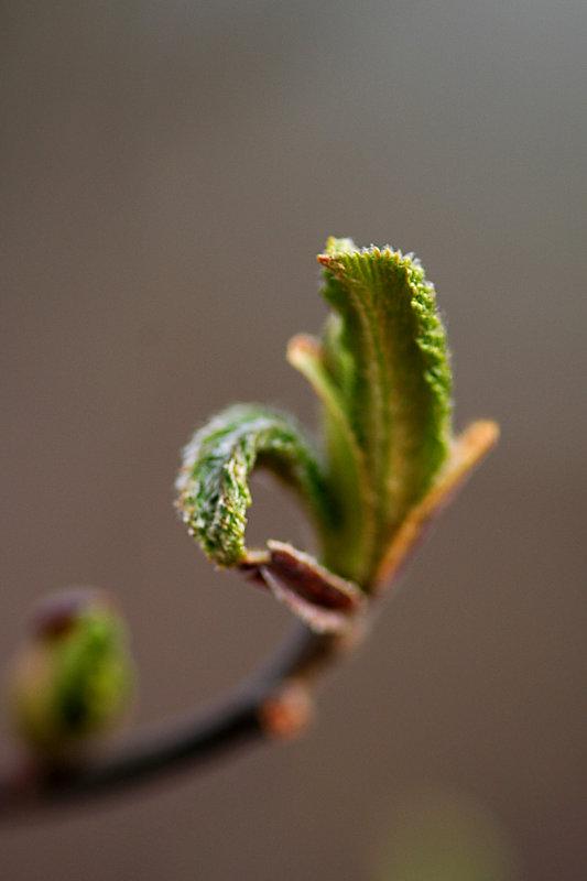 Tender new growth