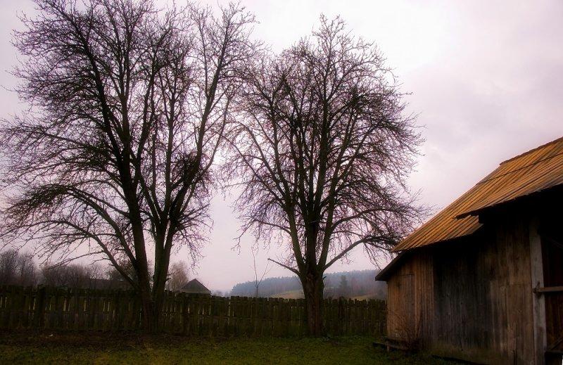 Rural farm in Guciow