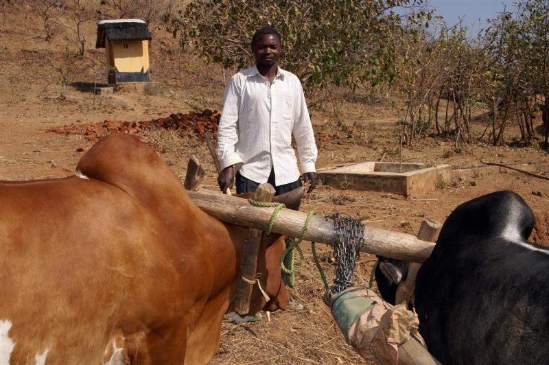 Lyson with oxen Large.jpg