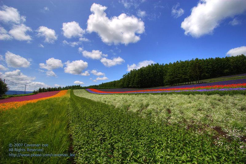 Flowers in Hokkaido