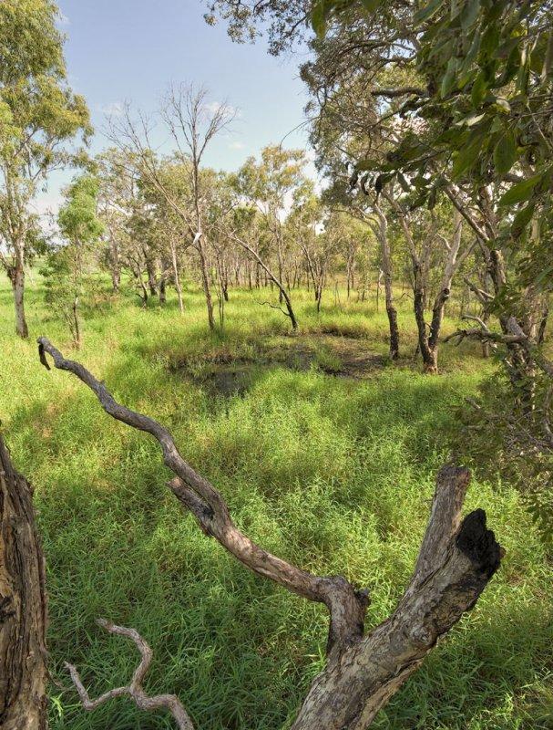 Tea tree swamp, Townsville Town Common DSC_8405