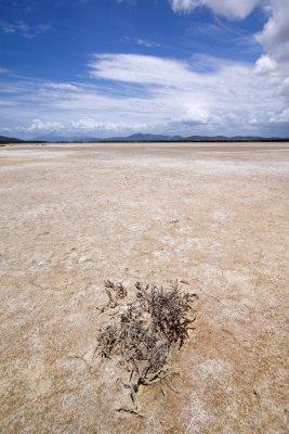 Salt flat with lone plant DSC_7624