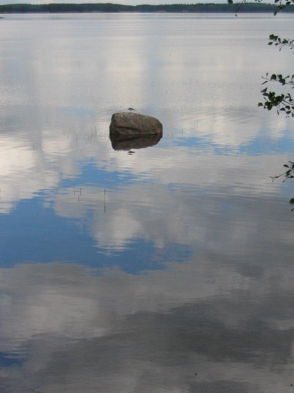 A bird on the stone