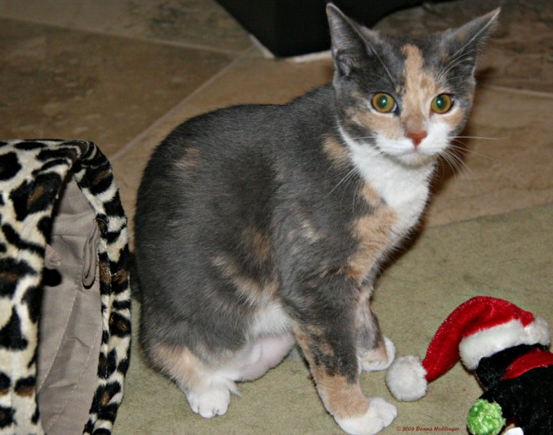 Kitty Josie with her toys