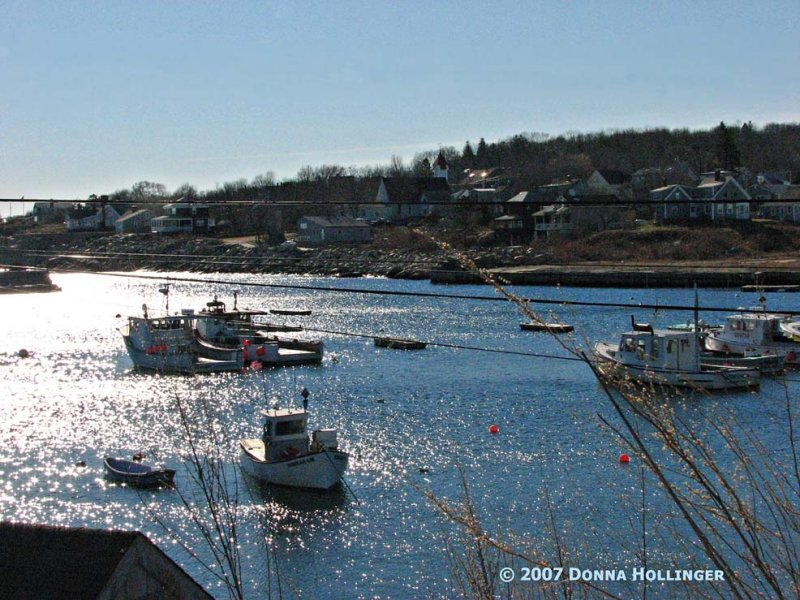 Pigeon Cove Scallopers