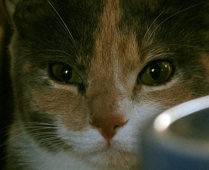 Josie the kitty