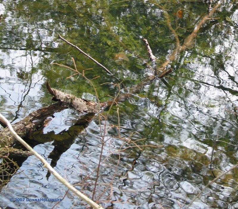 Assabet Vernal Pool
