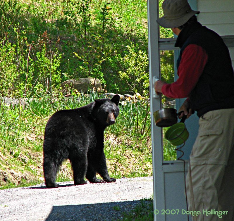 The bear and Peter