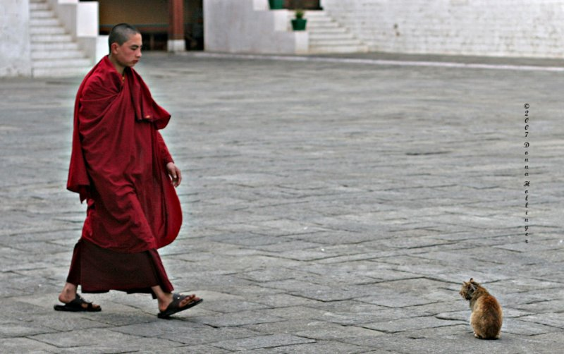 The Monk and the Kitty