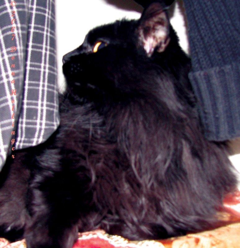 Pattys Kitty