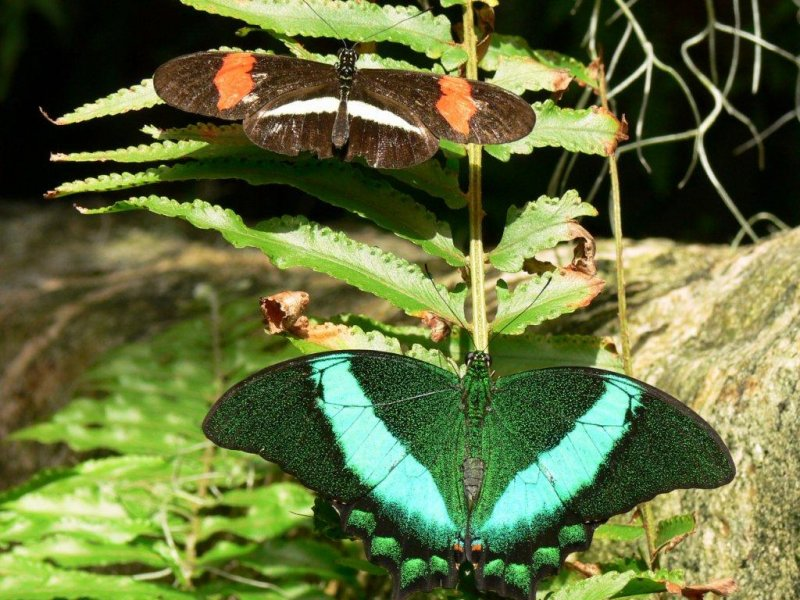 The Butterfly Conservatory at Niagara Falls