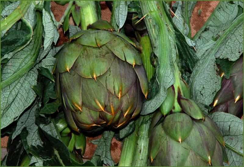 artichokes for sale