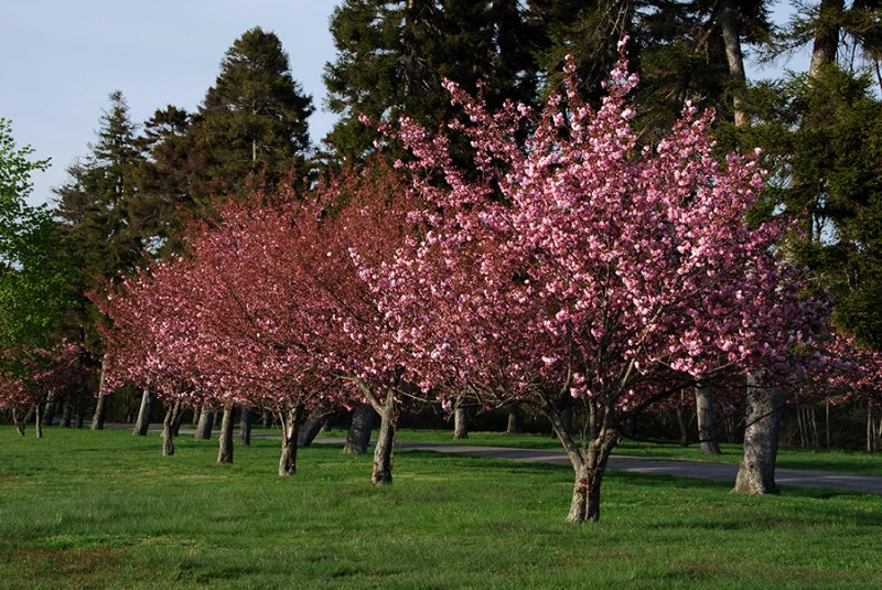 Springtime on Long Island