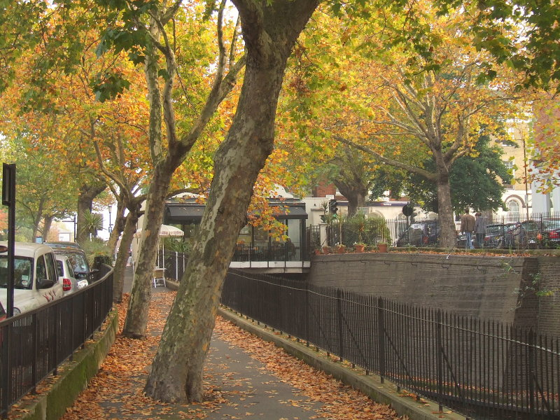 Trees by the Marylebone Tunnel