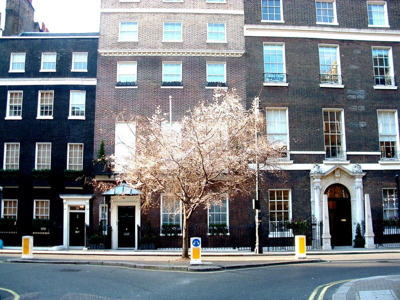A lone tree in Mayfair.