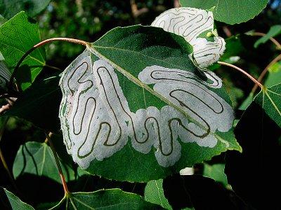 04-06 Denali  Bug Art.JPG