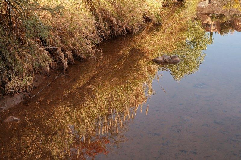 Giant Reeds reflected in Queen Creek