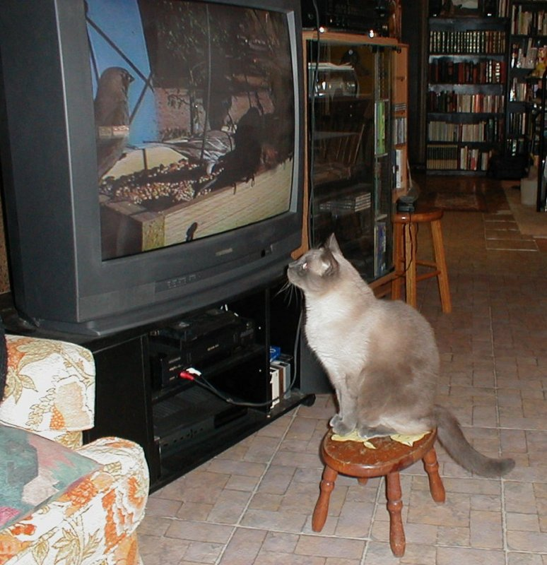 Boojum watching the TV