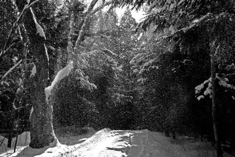 Neige sur le sentier