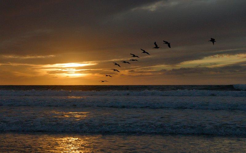 Torrey Pines & Pelicans