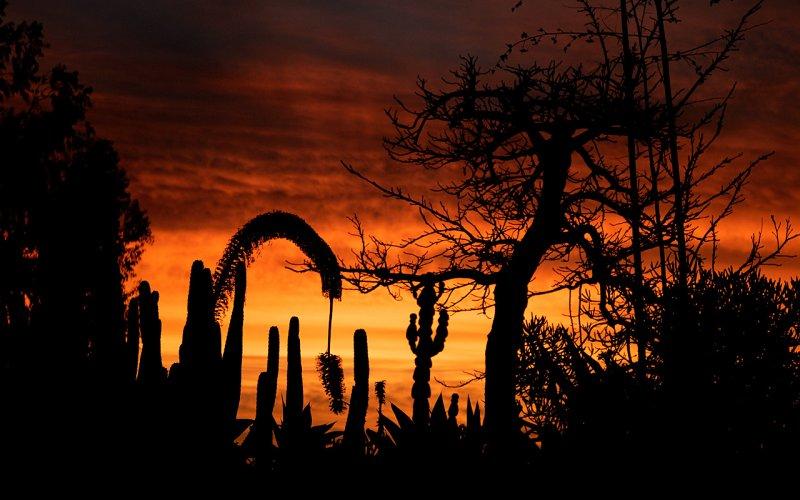 Sunrise Through the Cactus Garden