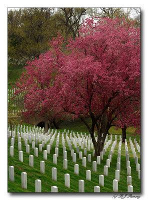 Light breaks through at Arlington Cemetery