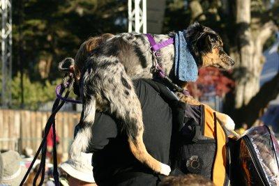 Crowd Surfing Dog