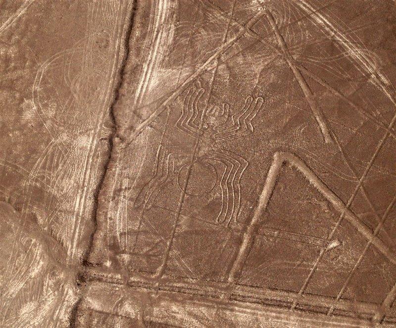 Spider, Nazca Desert
