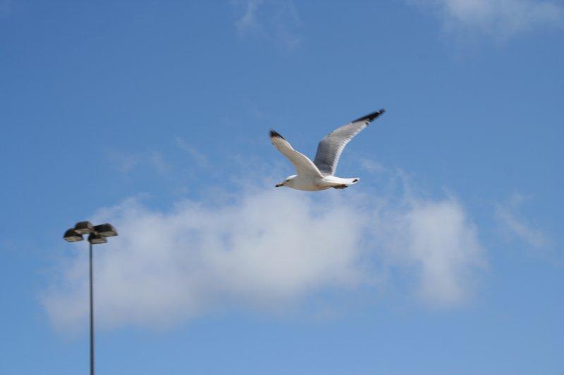 Flying Around...