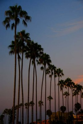 La Jolla Cove Series - Our Beautiful Palms