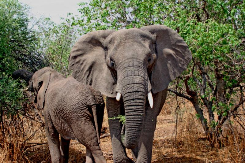 elephant_0008.jpg