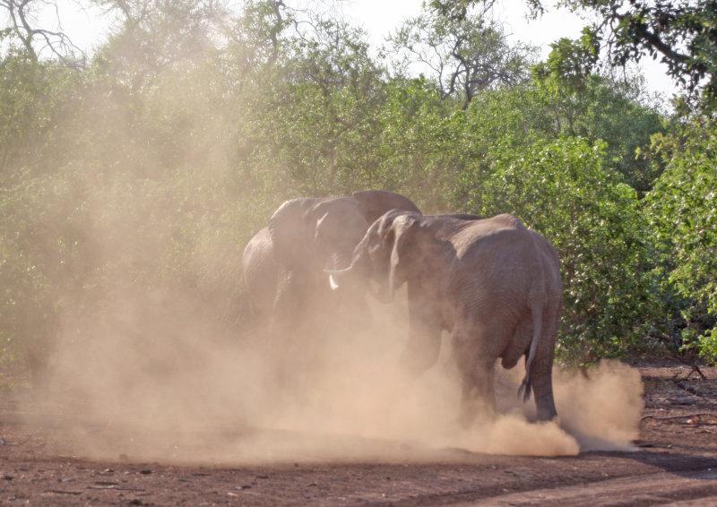 elephant_0142.jpg